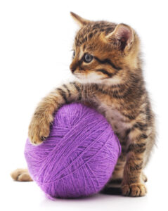 Alternatives to declawing -- protect your other animals
